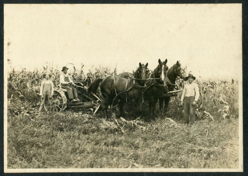 Great Grandpa Arthur ( on the binder) Great Granduncle Ernst (by horses), & Granduncle Melvin harvesting corn